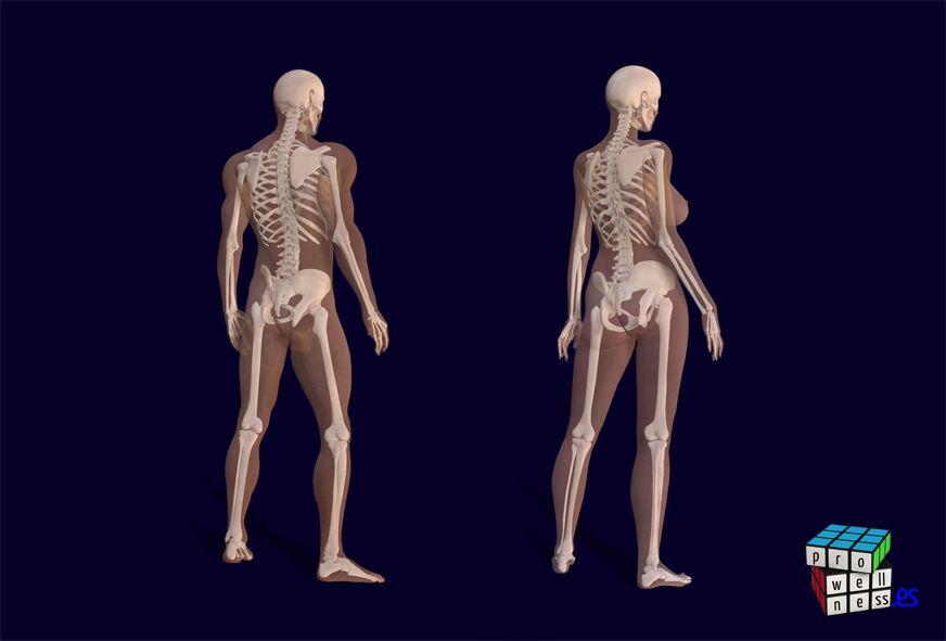Skeleton male-female
